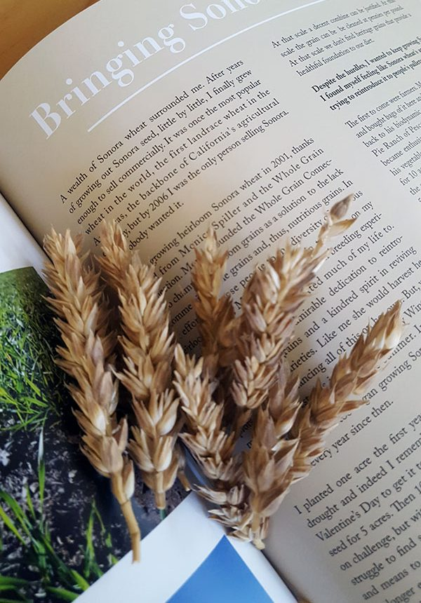 Grain Catalog - Sonora